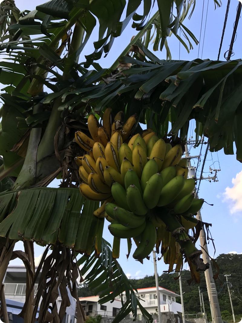 いつのまにかバナナが熟していた