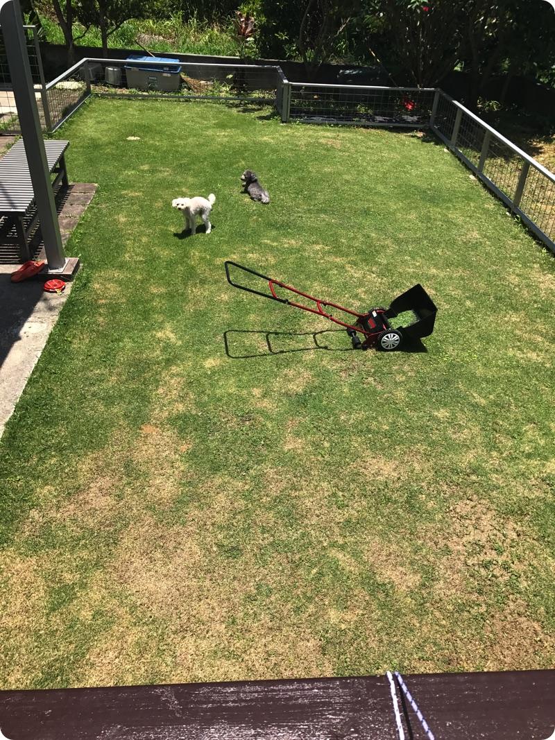 全力で芝生の整備中