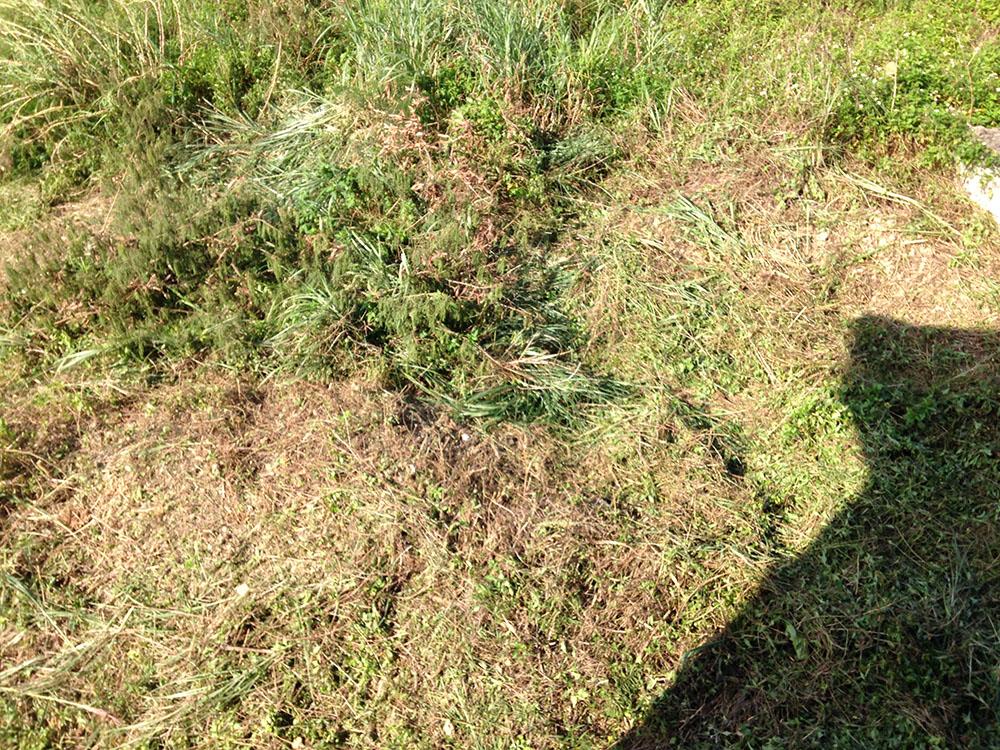 隣の敷地の草刈り