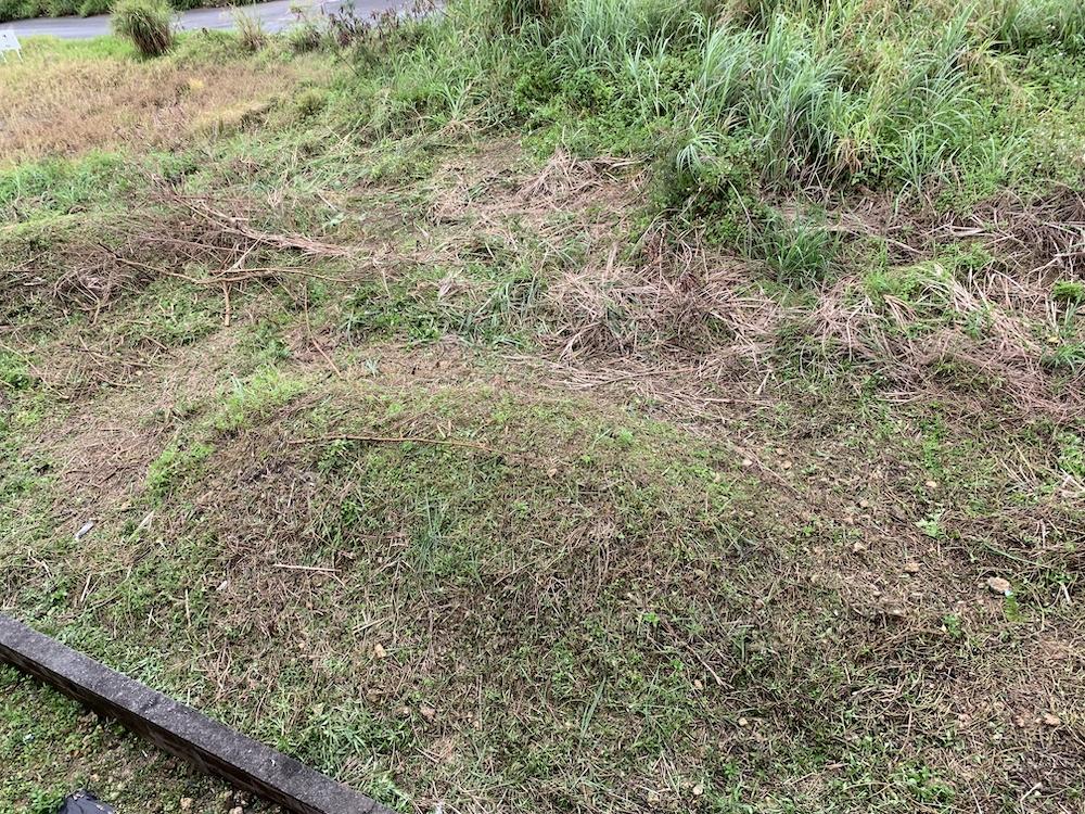 草刈り再び
