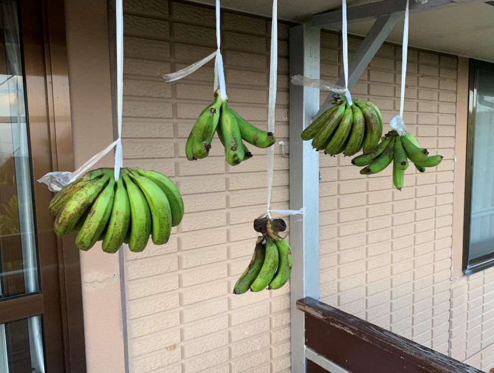 島バナナいただきました